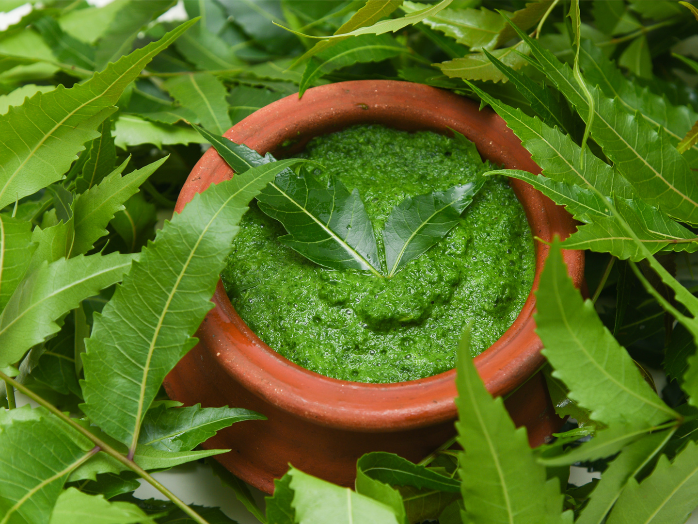 Neem – the wonder herb of Ayurveda
